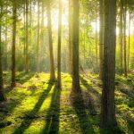 Adoption de programmes environnementaux